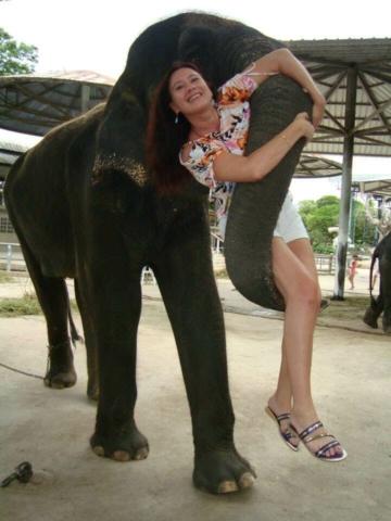 Слониха несет очень бережно