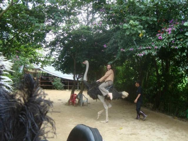 Катание на страусе во Вьетнаме